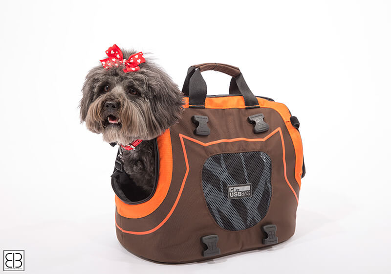 PetEgo EB Infinita small pet carrier, brown and orange, EBINFINITA-BO