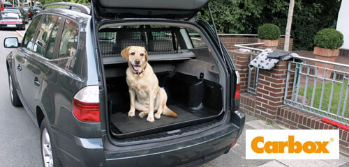 Carbox Yellow Lab Sitting in X3